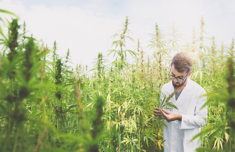 What is CBD oil and how can you use it to improve your health?